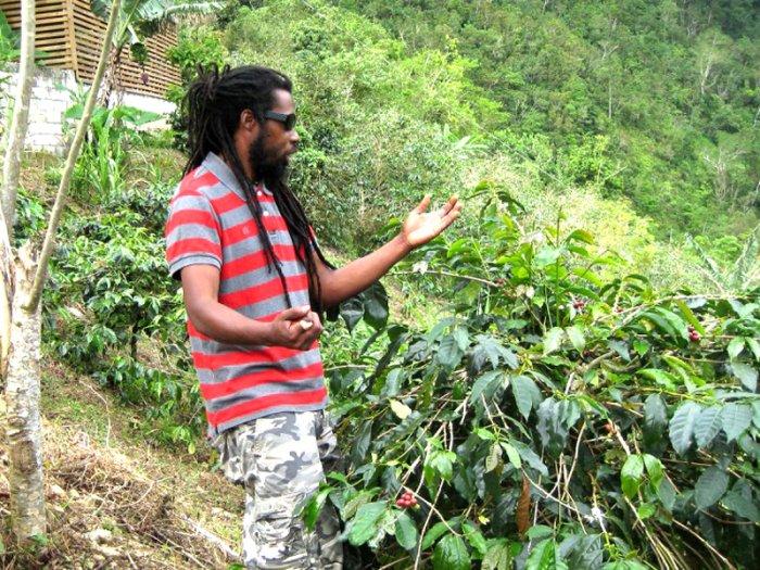 Zurück aus der Kaffeewelt Jamaikas