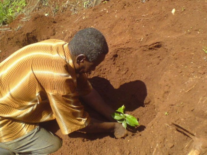 Kaffeebauern in Kenia profitieren vom Direktverkauf